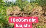 CHÍNH CHỦ BÁN ĐẤT NÔNG NGHIỆP SHR xã Thạnh Lợi, huyện Bến Lức, tỉnh Long An