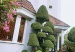 Bán villa siêu vị trí ngay gần Ngô Thời Nhiệm P. 6 Q3 có sân vườn, ao cá, vườn hồng (11.5*30m)